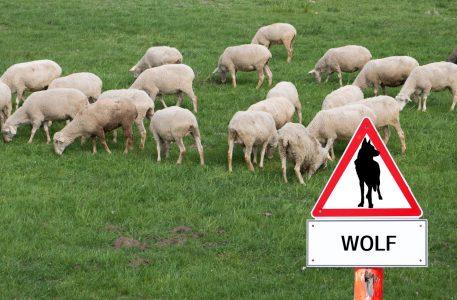 Warnschild Wolf - aktives Wolfsmanagement